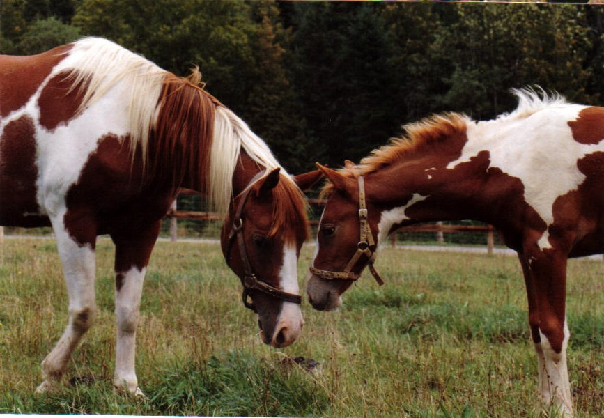 Half brothers Apache and Blaze